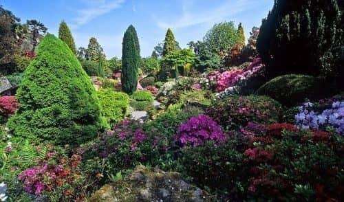 Буйство красок в растительности Англии