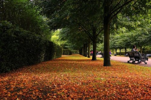 Риджентс Парк Осенью