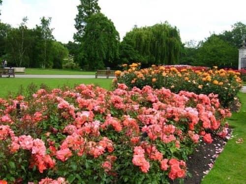 Сады роз королевы Марии